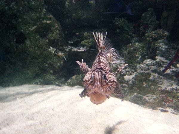 Fish Animal Themes Aquarium Life