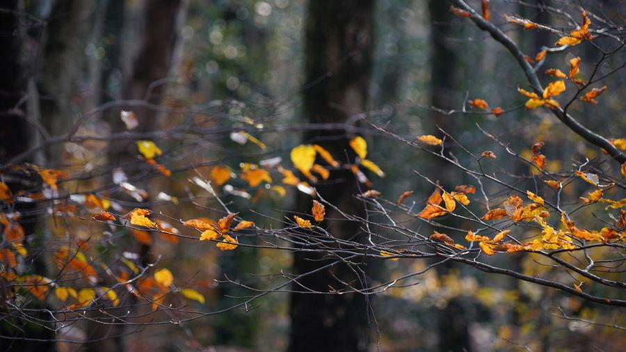 last orange