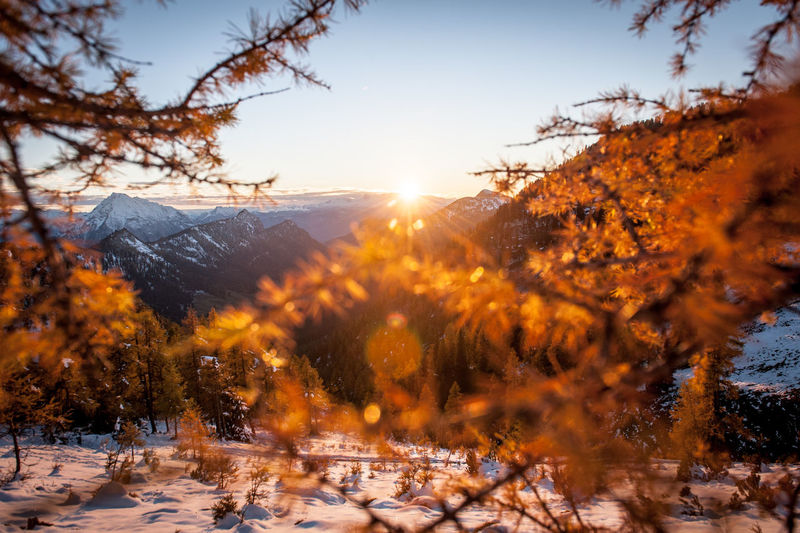 Sunset in the mountains after the first snow Tree Plant Winter Cold Temperature Sky Snow Sunlight Beauty In Nature Nature Change Orange Color Autumn Tranquility Sun Scenics - Nature Tranquil Scene No People Sunset Sunbeam Lens Flare Outdoors Bright