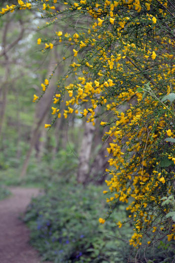 Yellow flowering plant in forest