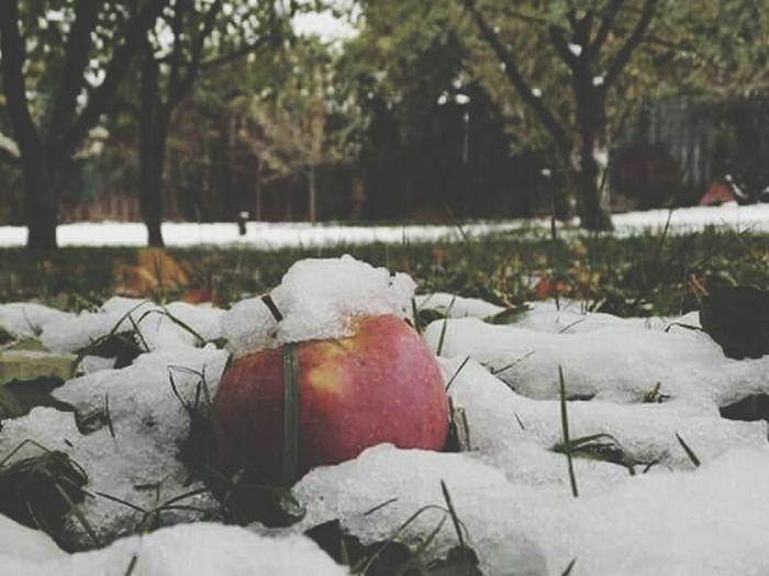 It's Cold Outside Cold Aple