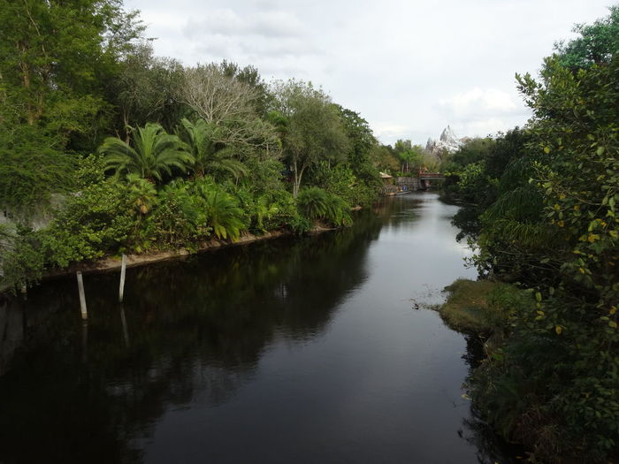 Scenic view of river amidst trees against sky