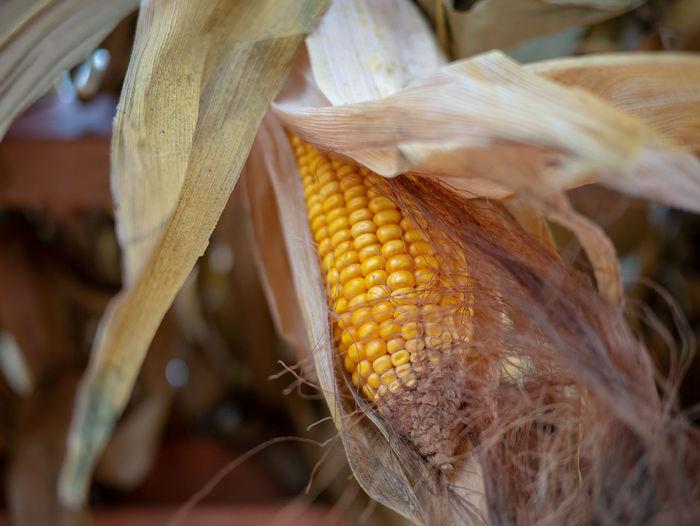 Corn Food Food