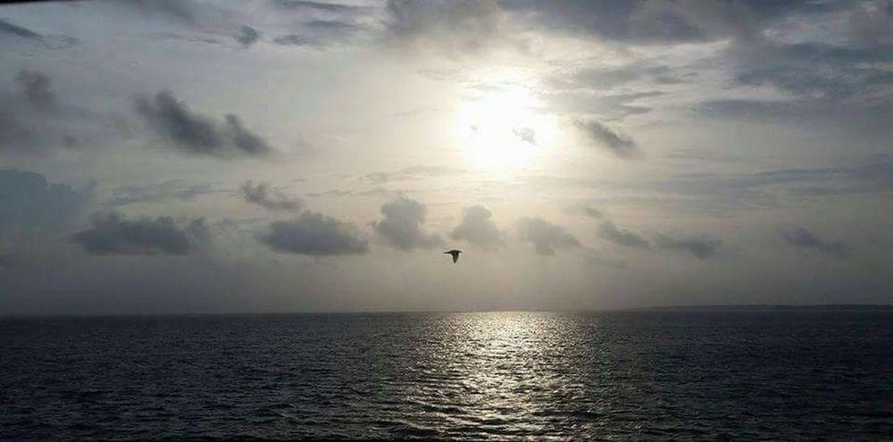 Gulf Coast, Florida Gulf Coast Lone Bird Water Surface