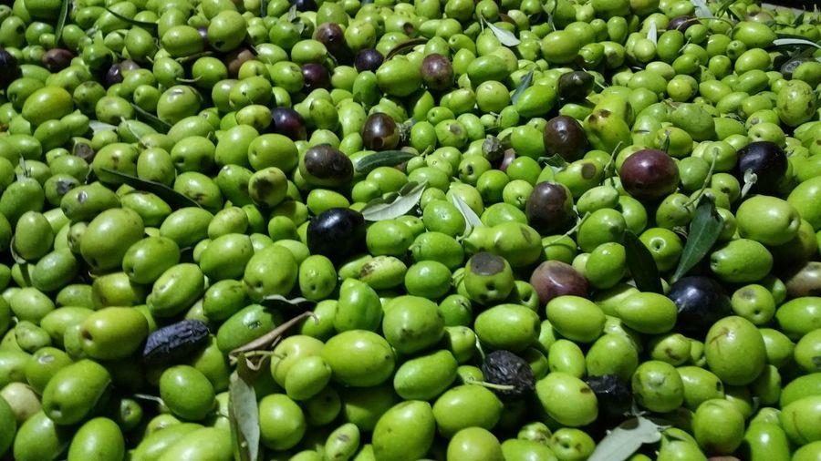 Full frame shot of olives on sunny day
