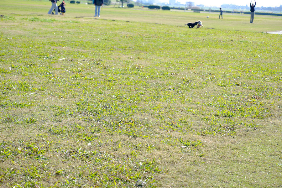 Field Fujifilm Fujifilm X-E2 Fujifilm_xseries Grass Green Color Japan Japan Photography Low Angle Low Angle View Lowangle Outdoors ローアングル 江戸川河川敷