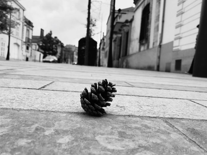 Close-up Loneliness Loneliness In A Picture Pinecone Urban Landscape Urban Photography Champagne Region France Champagne Life The Street Photographer - 2017 EyeEm Awards