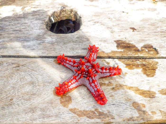 Close-up Of A Starfish On A Boat