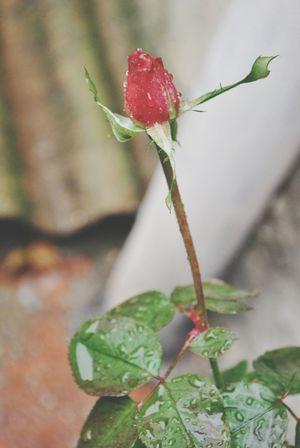 Flower Naturaleza Beutiful :)