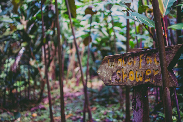 Outdoor Shower Sign - close up Honduras Nature Pico Bonito Plants Sign Tropical Paradise Adventure Close-up Forest Jungle No People Outdoor Shower Outdoors Point Of View Point The Way Rainforest Shower Tree Wet Wood - Material Wooden Sign