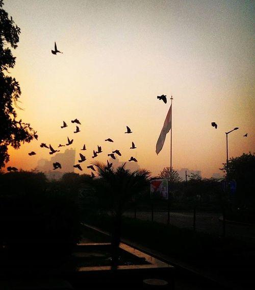 Thursday morning chills.. . . . . . . NYE 2016 NewYear Celebrate Ball Morning Delhi India Pride Flag Nation Birds Sky Sun Sunrise Trees Green Kush Chilling Winter Crazy Last Post OfTheYear Success key fresh ciroc colors boss