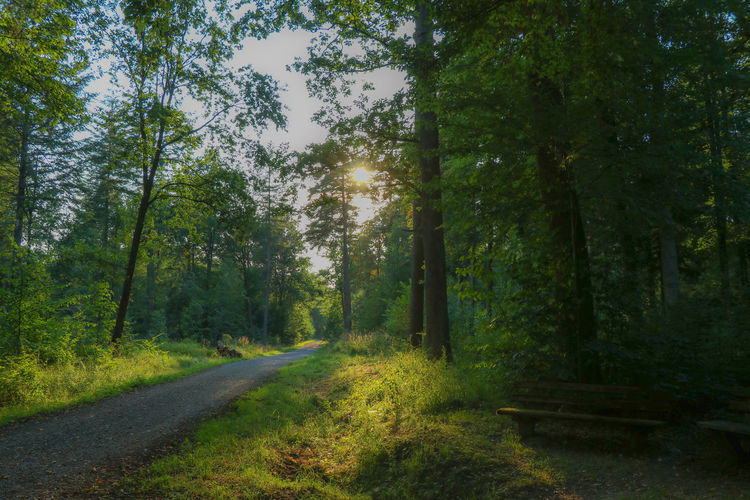 Sunlight in the forest Sunlight Beauty In Nature Day Direction Forest Green Color Growth Land Nature No People Non-urban Scene Outdoors Plant Road Scenics - Nature Sky Sun The Way Forward Tranquil Scene Tranquility Transportation Tree