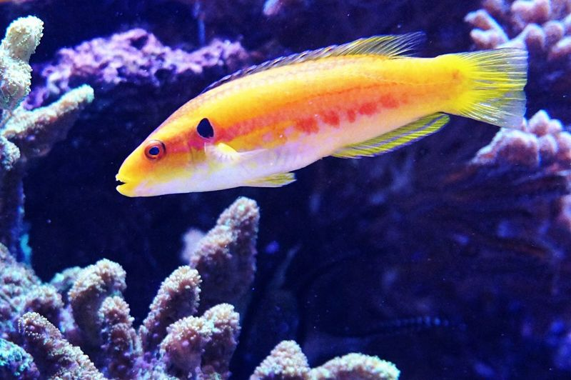 Fish Animal Animal Themes Sea Water Sea Life Marine Underwater Coral Aquarium No People UnderSea