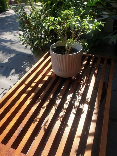 High angle view of potted plants on table in yard