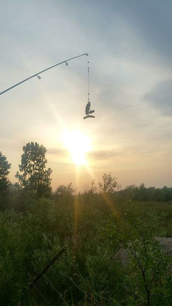 sunset obsessed Fishing Pole Love Life ❤ Just Breathe.❤ Just Smile  Beauty Is Everywhere  Bird Flying Air Vehicle Hovering