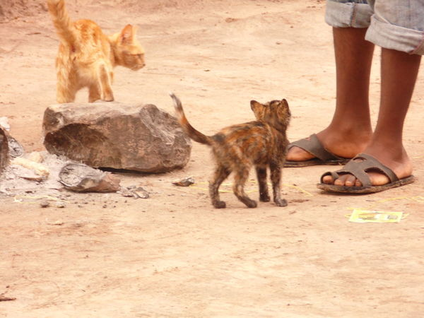 Animal Themes Animals In The Wild Day Domestic Animals Human Body Part Human Hand Human Leg Livingstone  Low Section Mammal Nature Outdoors Pets Playing Real People Zambia