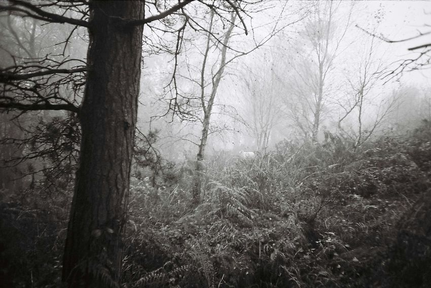 Nature Tree Trunk WoodLand Tree Growth Forest Tranquility Landscape Beauty In Nature Outdoors Hiking Foggy Day Foggy Landscape Creepy