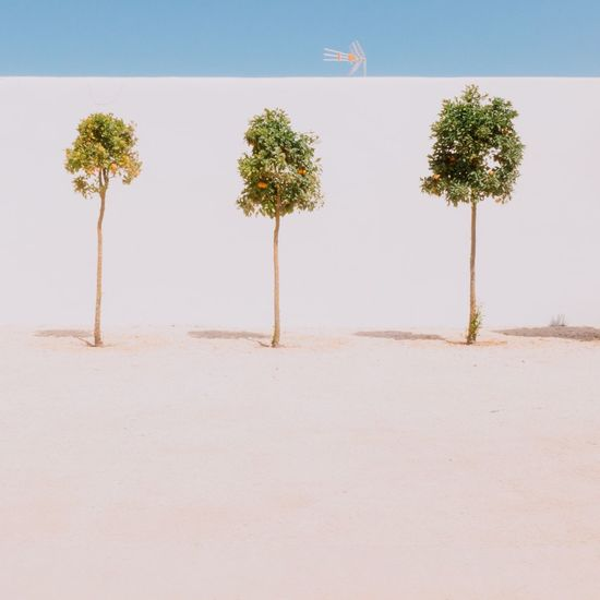 EyeEm Selects Tree Growth Plant No People Nature Day Sand Beauty In Nature Outdoors Sky Trees Orange Tree