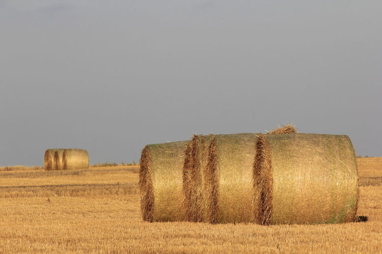 Kansas Golden Straw Bales Bales, Kansas, Yellow, Agriculture Beauty In Nature Blue, Colorful, Crop  Field, Hay Hay Bale Landscape Outdoors Sky Straw