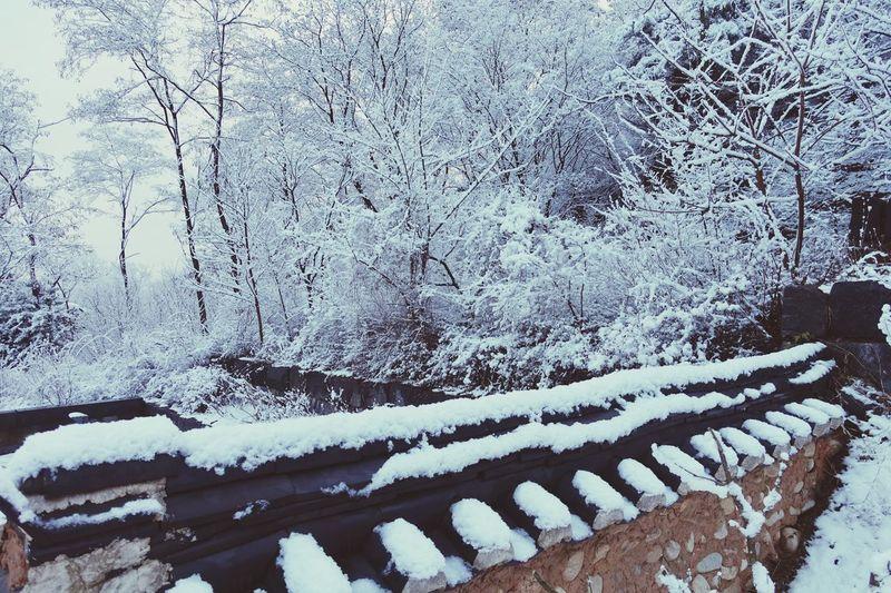 Snow ❄ Snowing Day Snow Views Park Korean Park Trees