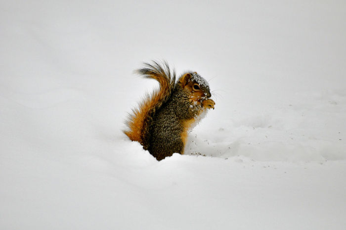 Animals In The Wild Animals In Winter Mammal No People One Animal Snow Snow ❄ Squirrel Wildlife My Winter Favorites