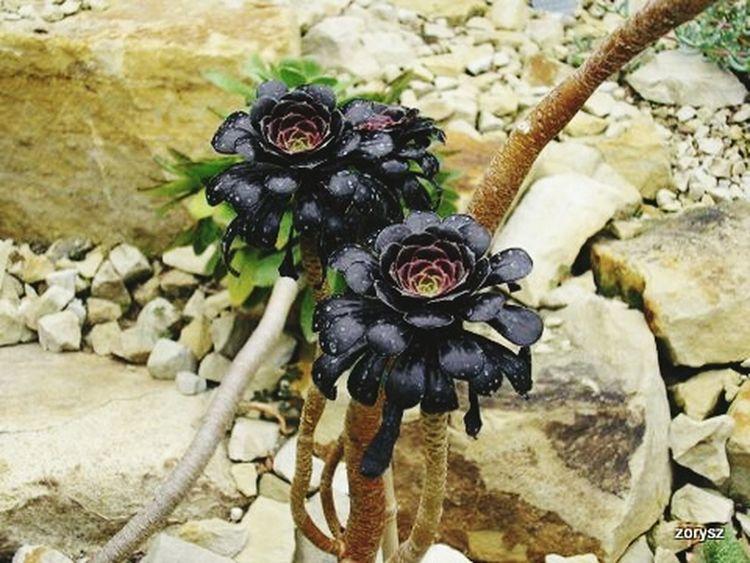 Blum Blumoj Hello World Park Plants Hamburg Blumen Kwiaty Planten Un Blomen