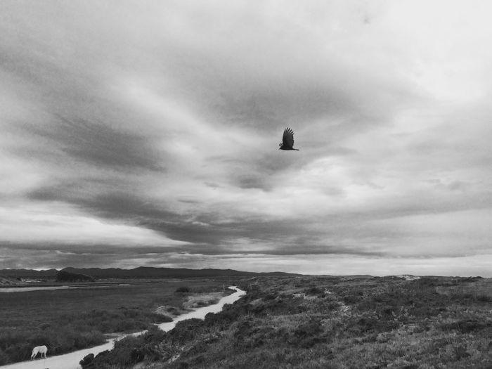 Blackandwhite EyeEm Nature Lover Clouds And Sky Enjoying Life walking.