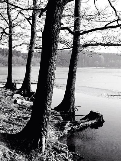 Bnw_friday_eyeemchallenge Water Lake Trees Blackandwhite