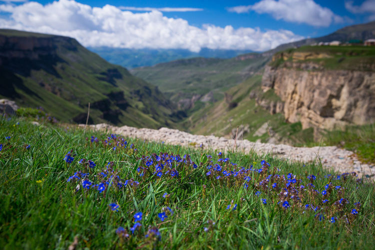 Scenic view of purple flowers growing on land
