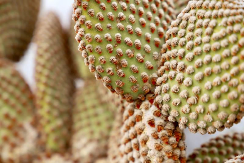 Cactus Close-up Cactus Plant Focus On Foreground No People Green Color Succulent Plant Day Pattern Thorn Selective Focus Outdoors Growth