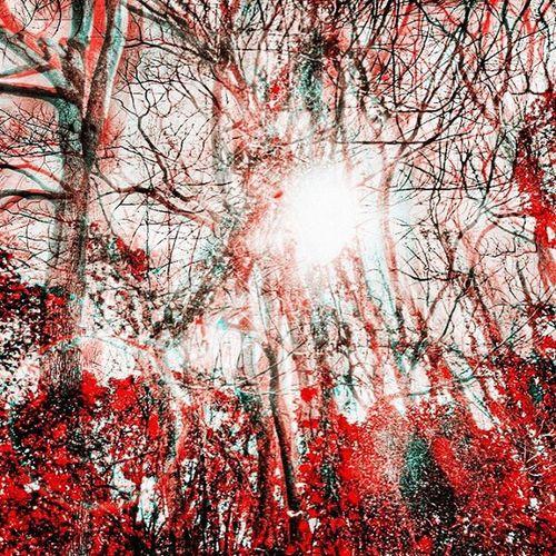 Houseofphoenixeleven Sunnydays Spring Art Luvart Photography Springdaze Create Beinspired Inspire Sunshine Trees Fractals