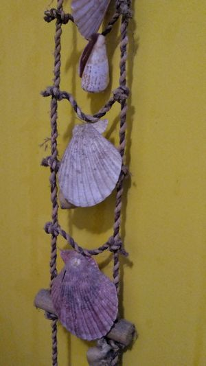 Shells Shell Ornament Shells🐚 No People Yellow Shell Collection Shellfish🐚 Yellow Wall Wall Ornament