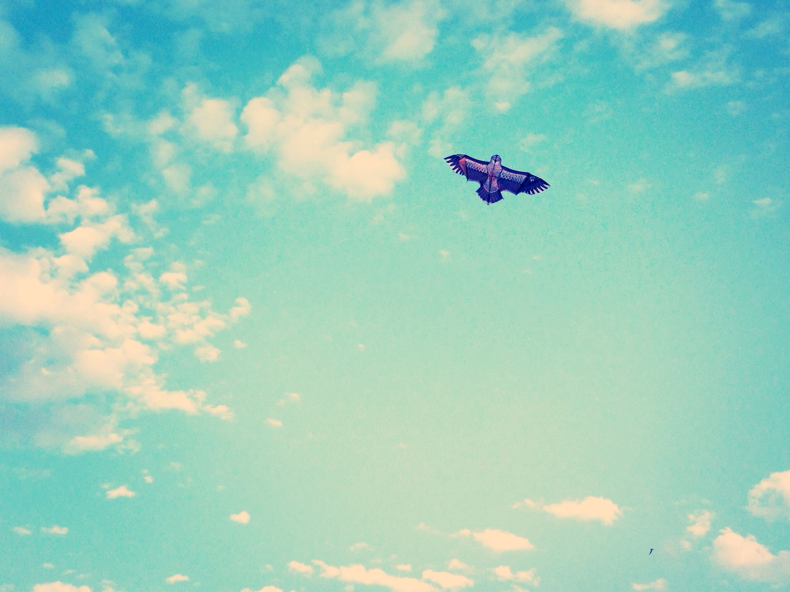 flying, low angle view, blue, mid-air, sky, cloud - sky, nature, transportation, day, freedom, cloud, outdoors, beauty in nature, airplane, air vehicle, on the move, motion, no people, airshow, mode of transport
