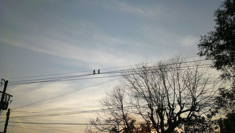 Low angle view of silhouette birds against sky