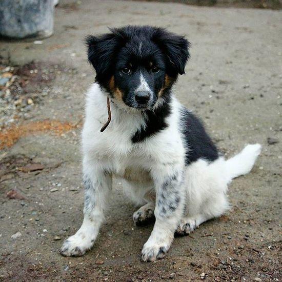 собака СобакаДругЧеловека МояСобака моясобакаизприюта щенок щеночек собачка геба чернобелое пятна Dog Puppy Mydog Mupuppy мойщенок Blackandwhite Myfriend