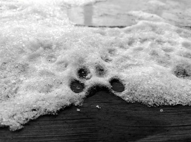No People Close-up Outdoors Day Paw Print Nature Snow Snow Print Winter Winter_collection Winter Day Winter Cat Cat Cat Paw Cat Paw Print Black & White Friday