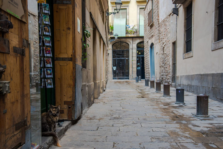Barcelona Barcelona, Spain Catalunya Gothic Architecture Travel Animal Animal Themes Architecture Building Exterior Built Structure Cat Cat Lovers Cats Domestic Animals Gothic Style Mammal No People One Animal Outdoors Pet Pets Street Street Photography Streetphotography The Way Forward