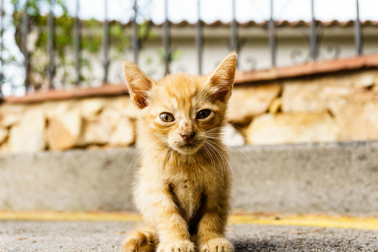 Animal Themes Cat Cats Close-up Day Domestic Animals Domestic Cat Feline Focus On Foreground Looking At Camera Mammal Nature No People One Animal Outdoors Pets Portrait Retaining Wall Sitting Whisker Pet Portraits The Week On EyeEm EyeEmNewHere Paint The Town Yellow
