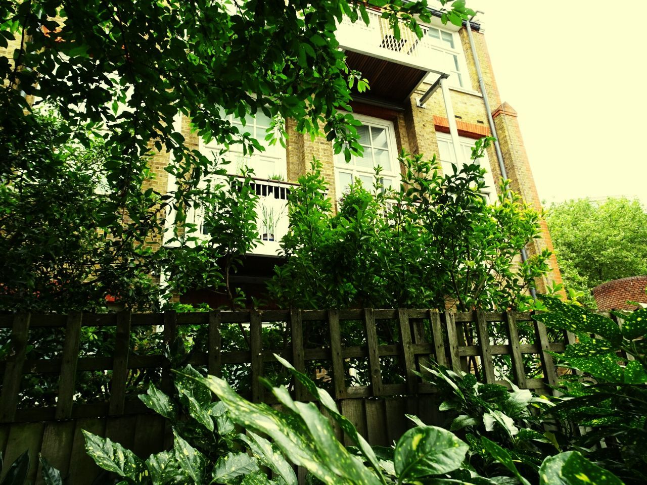 growth, low angle view, no people, plant, tree, architecture, green color, built structure, building exterior, day, outdoors, leaf, nature