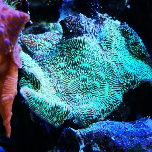 Underwater Coral Sea Life Water Blue Multi Colored Aquarium Life Beauty In Nature Reef Fishtank Coral Reef Marine Life Aquarium Photography Fishkeeping Fishkeepers Reeftank