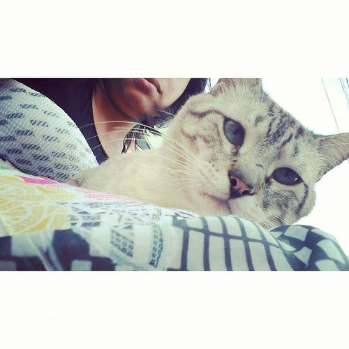 Domestic Cat Animal Themes Feline Lovecat💜 Apaixonadaporgatos Catsofeyem Catselfie 🐱Cute