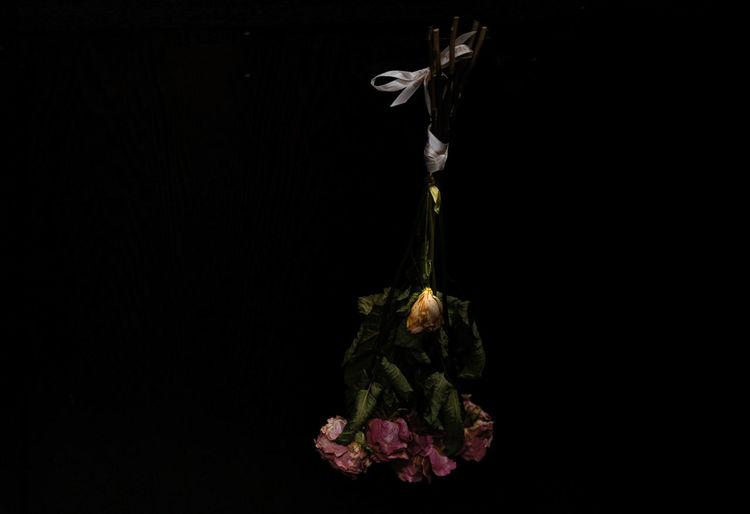 タグがうまく出てこないときある(^^;; Black Background Dark Darkroom Flower Flowers No People Red Roses Yellow