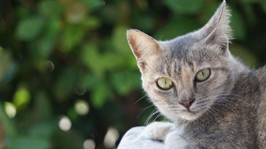 cat looking at