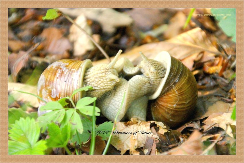 Art In Photography Beauty In Nature Flowers, Nature And Beauty Love Pleasures Of Nature Rainbow Snails In Love Swan Neck