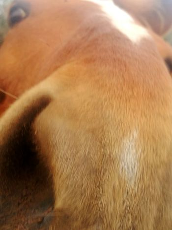 Nature_collection Horse Horse Photography  Horse Love Horsenose Horseeye Close-up