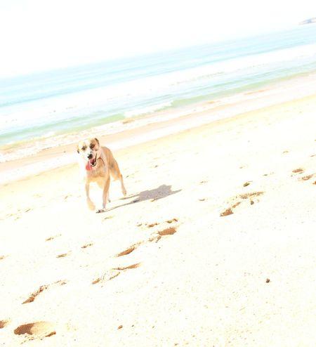 Beach At The Beach Morning Run Cute Pets