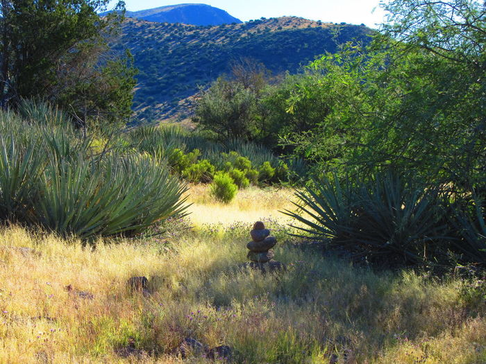 Towel Creek Trail #67. Arizona Adventure Arid Climate Beauty In Nature Day Grass Growth Hiking Landscape Mountain Nature Outdoors Plant Scenics Tree