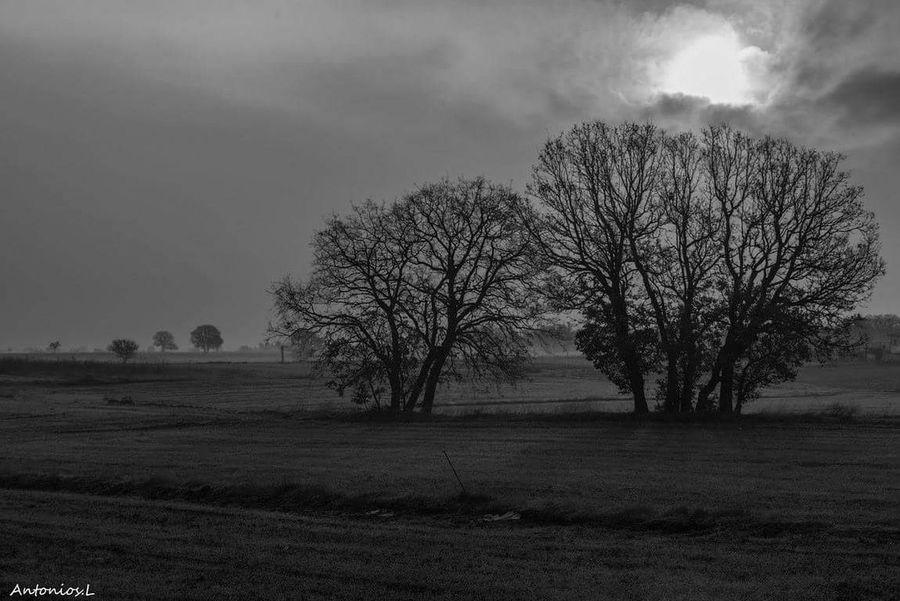 Cold Tree Field Bare Tree Landscape Rural Scene Beauty In Nature Fog