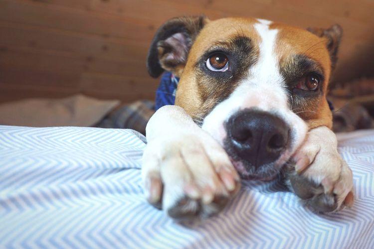 Life is ruff Dog Love Dogs Doglover Dogstagram Doglive Saddog Pets Portrait Dog Puppy Close-up Boxer - Dog