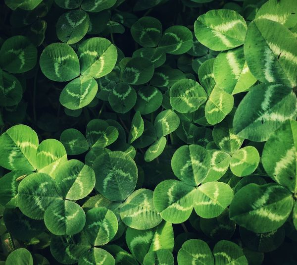 Green Color Leaf Growth Beauty In Nature Plant Nature